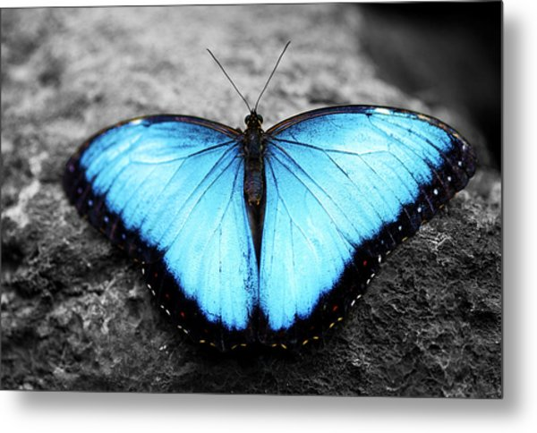 Blue Angel Butterfly 2 Metal Print