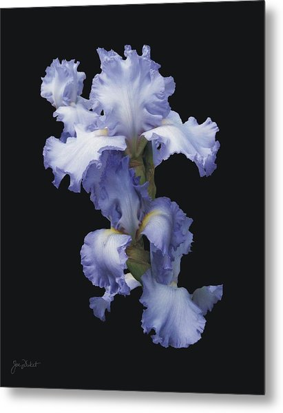 Blue Bearded Iris Metal Print