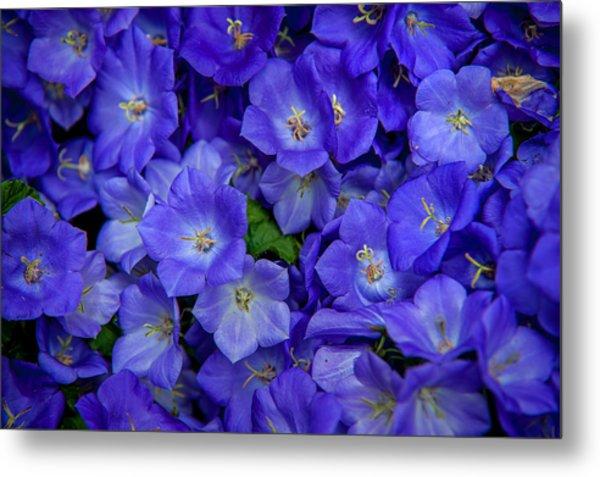 Blue Bells Carpet. Amsterdam Floral Market Metal Print