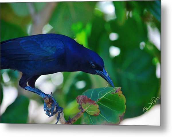 Blue-black Black Bird Metal Print