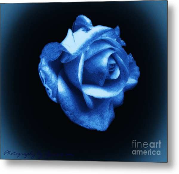 Blue Blue Rose Metal Print