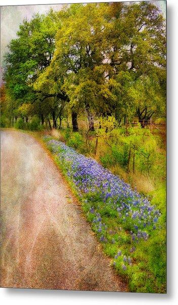 Blue Bonnet Path Metal Print