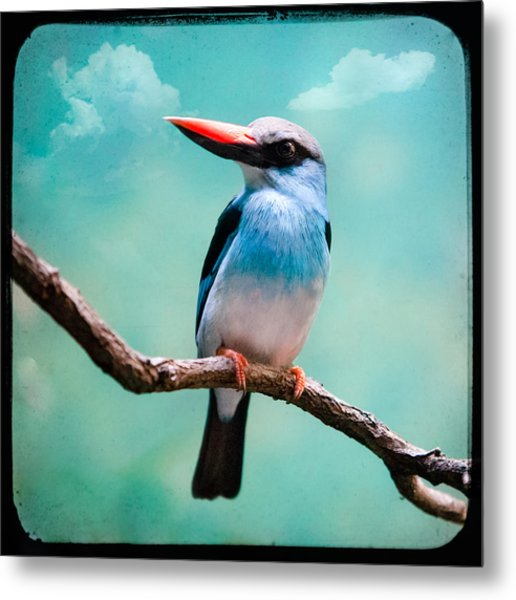 Blue Breasted Kingfisher Metal Print