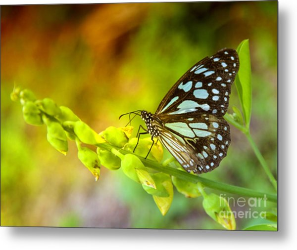 Blue Butterfly With Beautiful Colors Metal Print by Gina Koch