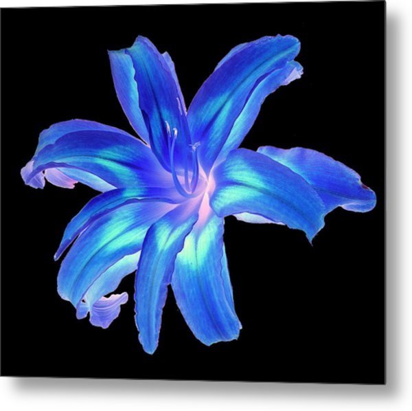 Blue Day Lily #2 Metal Print