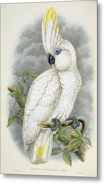 Blue-eyed Cockatoo Metal Print