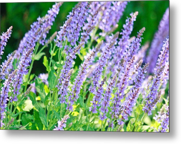 Blue Fortune Flower Spikes Metal Print