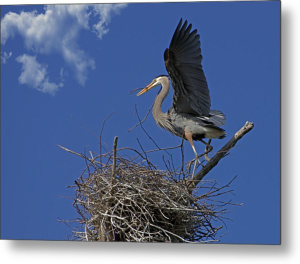 Blue Heron Construction Site Metal Print
