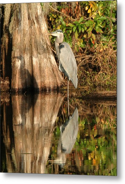 Blue Heron Reflection Metal Print by Jeff Wright