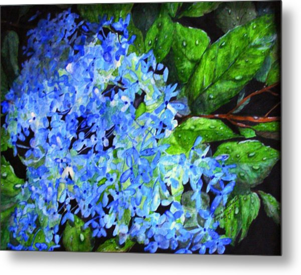Blue Hydrangea After The Rain Metal Print