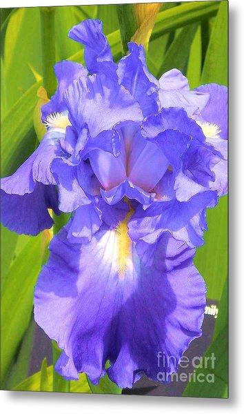 blue Iris Metal Print by Claudette Bujold-Poirier