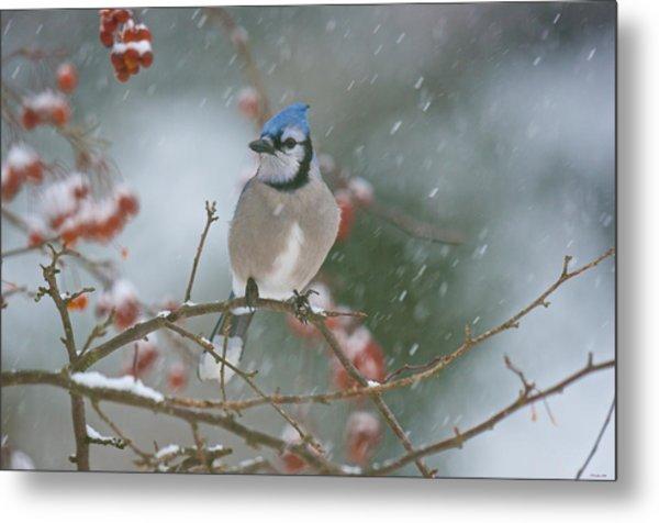 Blue Jay In Snow Metal Print