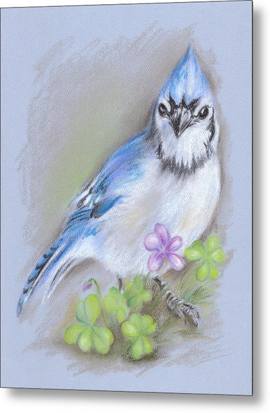 Blue Jay In Spring With Oxalis Metal Print