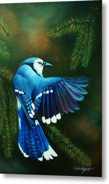 Blue Jay Metal Print