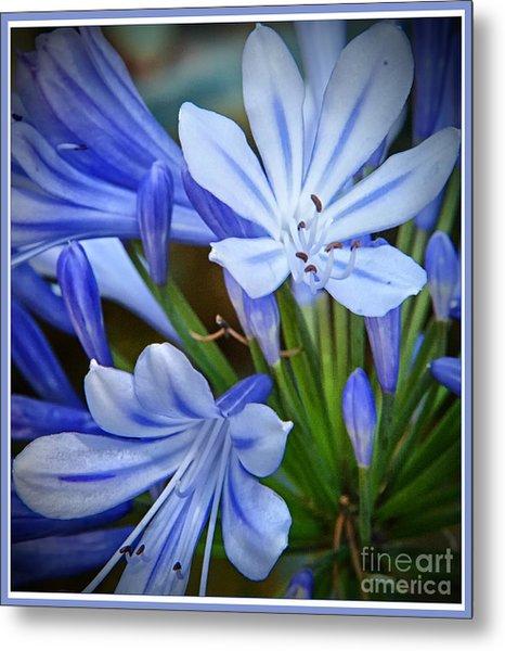 Blue Lilie Metal Print
