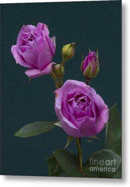 Blue Moon Roses Metal Print