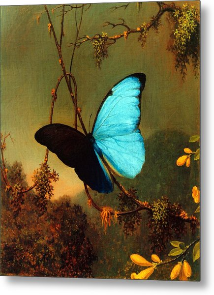 Metal Print featuring the painting Blue Morpho Butterfly by Martin Johnson Heade
