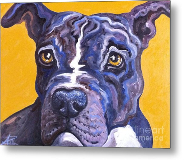Blue Nose Pitbull Metal Print