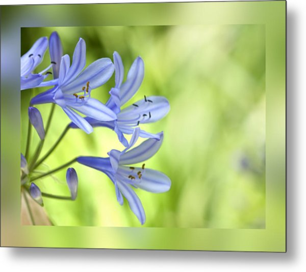 Blue On Green Metal Print