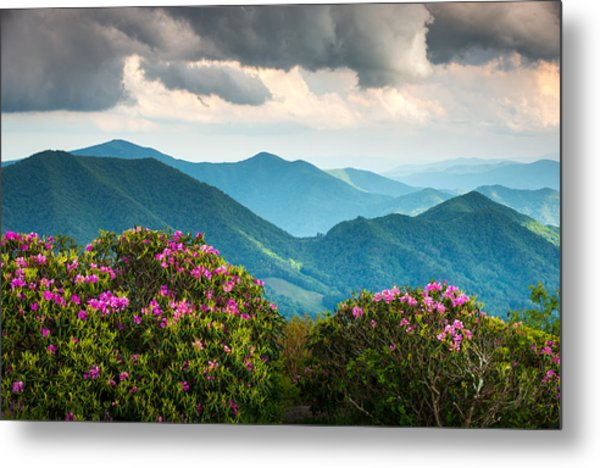 Blue Ridge Appalachian Mountain Peaks And Spring Rhododendron Flowers Metal Print