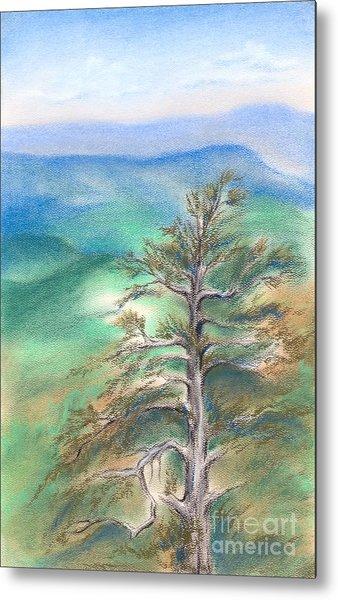 Blue Ridge Pine Metal Print