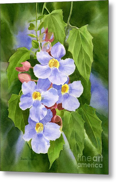 Blue Sky Vine With Background Metal Print by Sharon Freeman