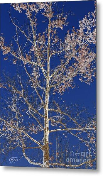 Blue Sky With A Twist Of Birch Metal Print