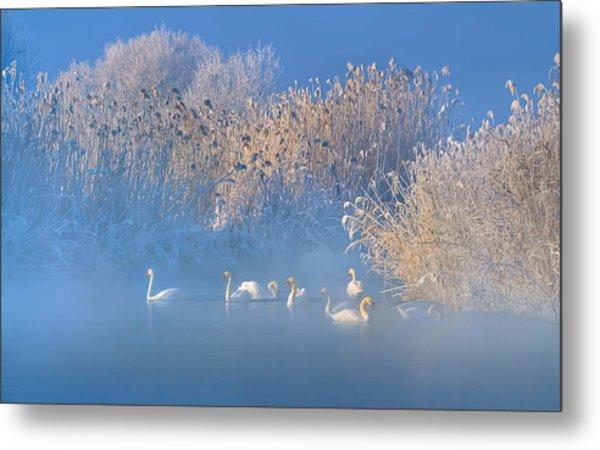 Blue Swan Lake Metal Print