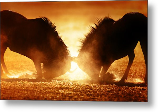 Blue Wildebeest Dual In Dust Metal Print