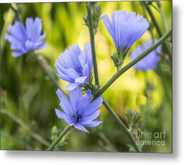 Blue Wildflwer Metal Print