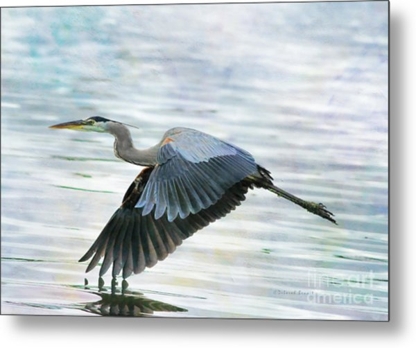 Blue With Grace And Beauty Metal Print