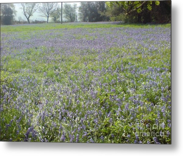 Bluebell Fields Metal Print
