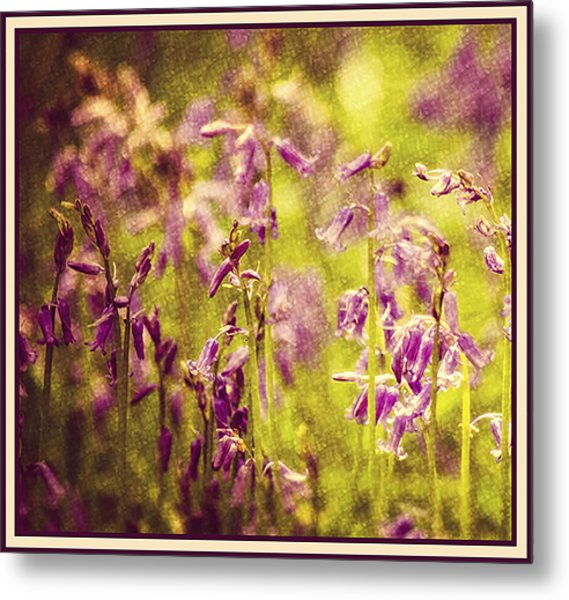 Bluebell In The Woods Metal Print