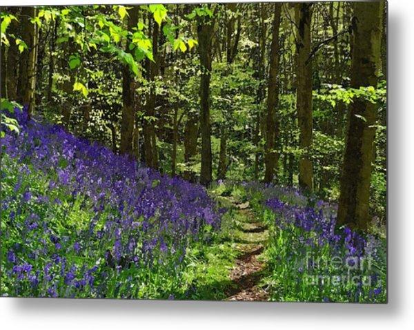 Bluebell Woods Photo Art Metal Print