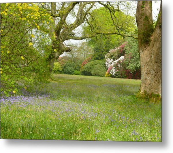 Bluebells And Rhododendrons Metal Print by Rob Sherwood