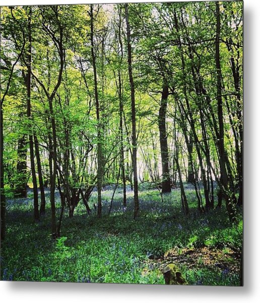 Bluebells In Pittswood  Metal Print