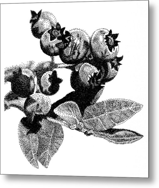 Blueberry Metal Print by Rob Christensen