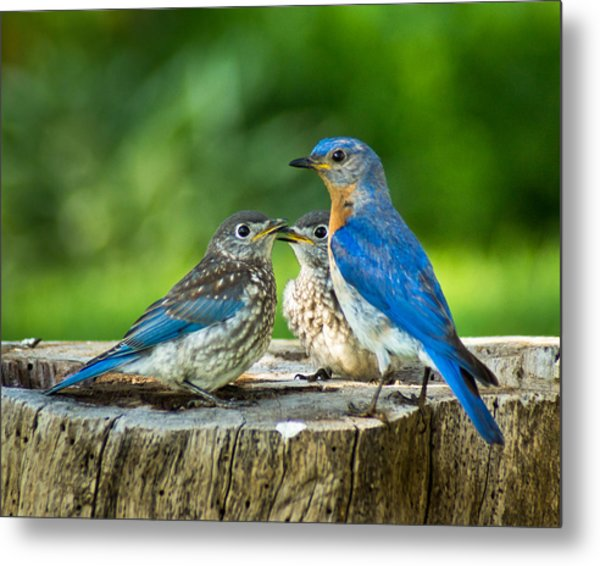 Bluebird - Father And Sons Metal Print