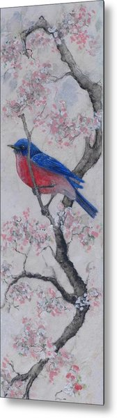 Bluebird In Cherry Blossoms Metal Print by Sandy Clift