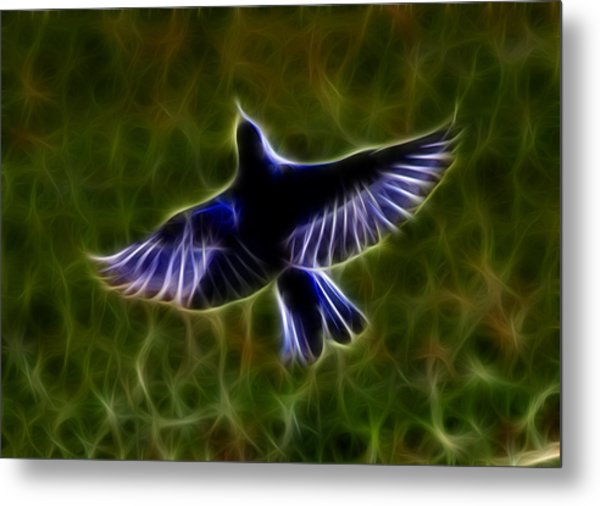 Bluebird In Flight Metal Print