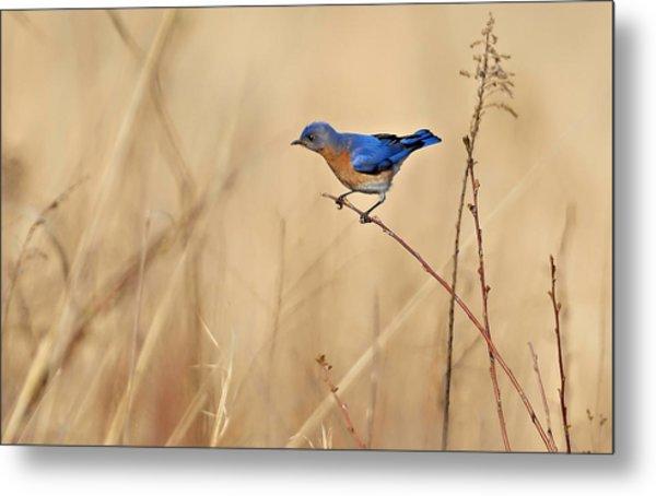 Bluebird Meadow Metal Print