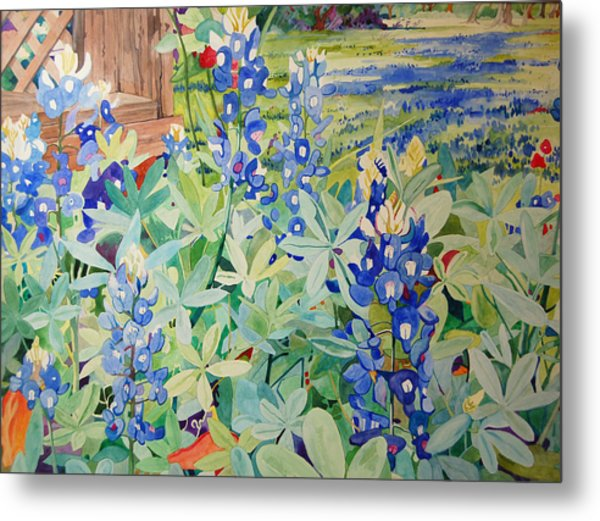 Bluebonnet Beauties Metal Print