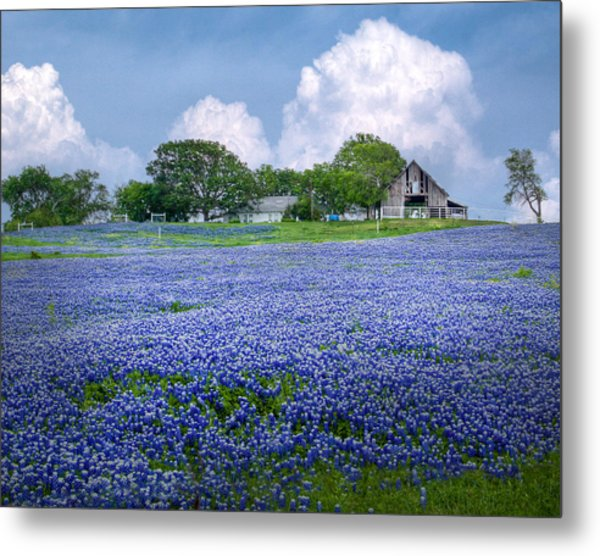 Bluebonnet Farm Metal Print