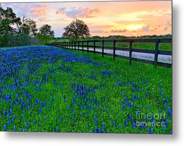 Bluebonnet Fields Forever Brenham Texas Metal Print