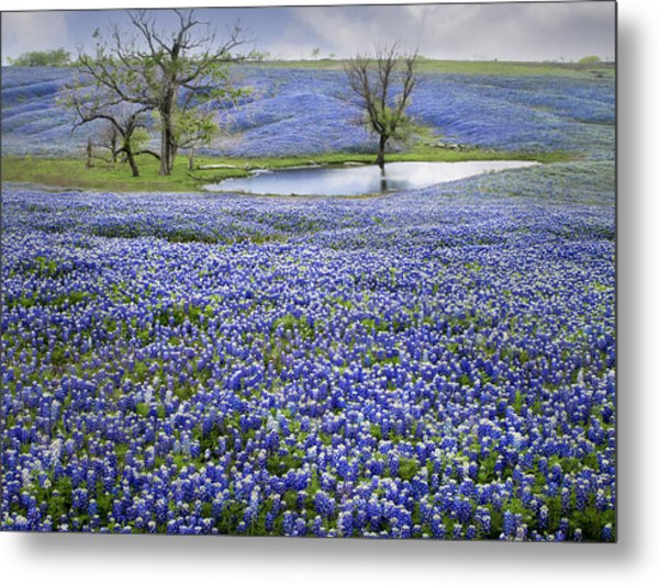 Bluebonnet Pond Metal Print