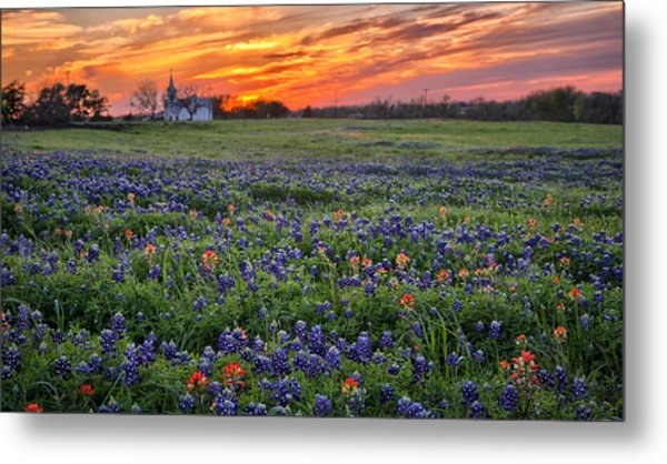 Bluebonnet Sunset Metal Print