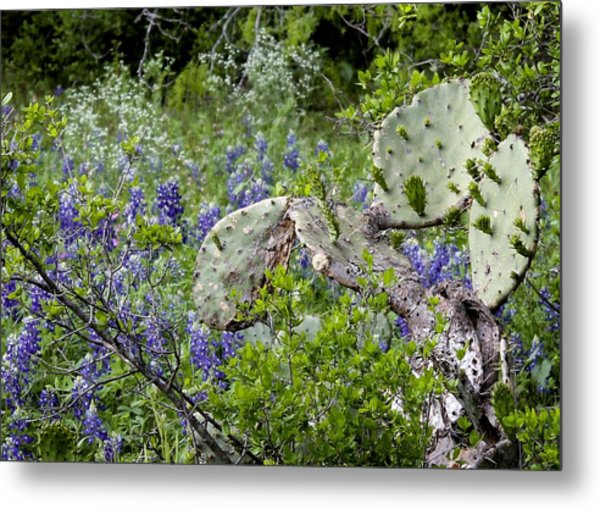 Bluebonnets And Cactus Metal Print