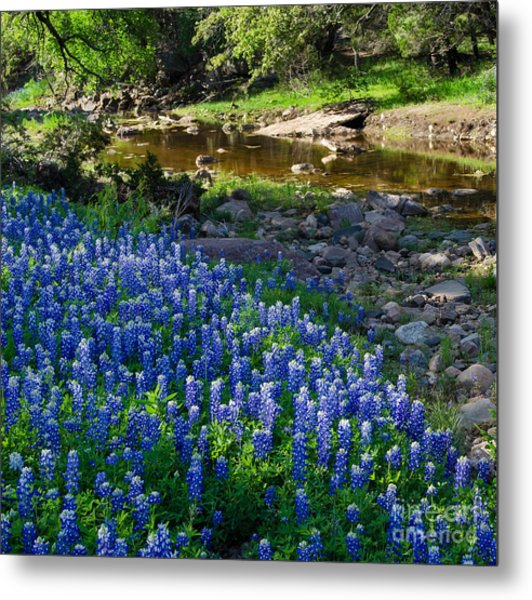 Bluebonnets By The Stream Metal Print