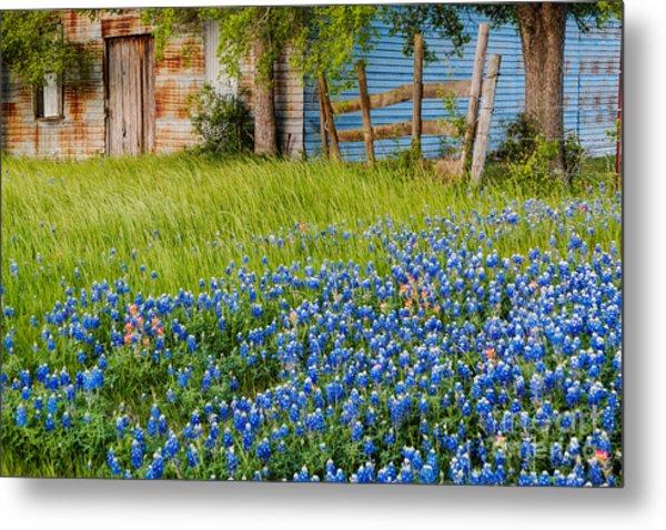 Bluebonnets Swaying Gently In The Wind - Brenham Texas Metal Print