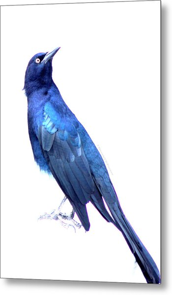 Bluish Bird Metal Print by DerekTXFactor Creative